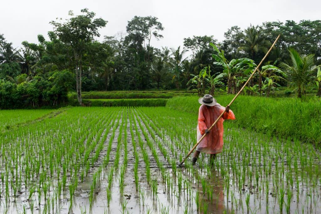 man holding bamboo stick on rice field during daytime